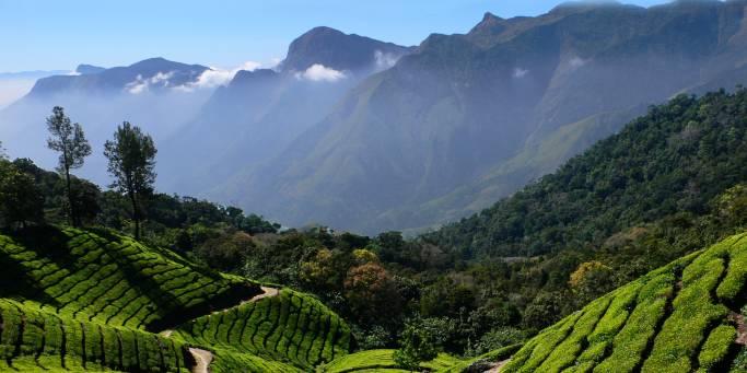 Tea plantation | Kerala | India