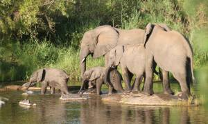Big-Five-Explorer-Itinerary-Main-Overland-Journeys-Africa