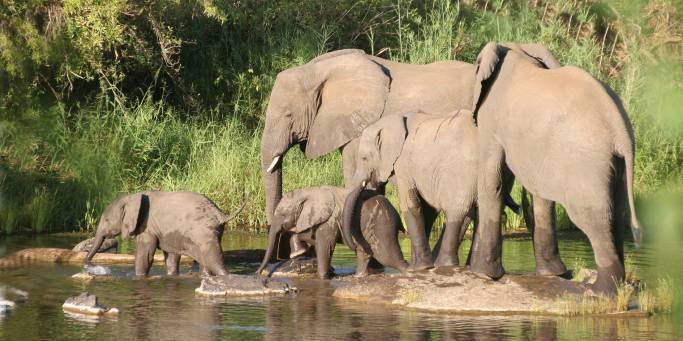 Elephants | Africa Overland Safaris | Africa
