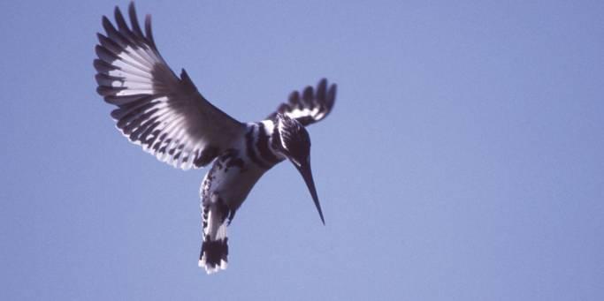 Bird watching | India