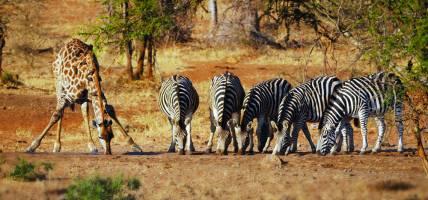 Botswana-Tab