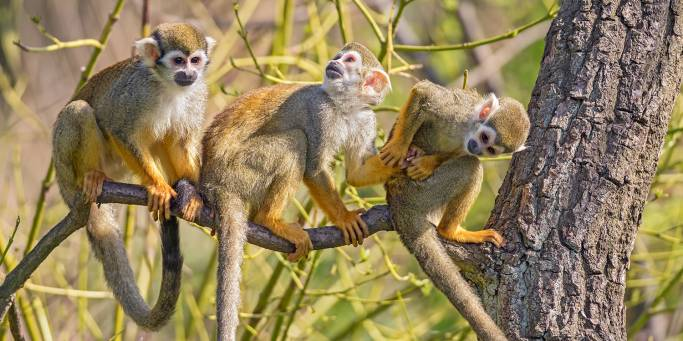 Squirrel Monkeys in the Amazon | Brazil | On The Go Tours