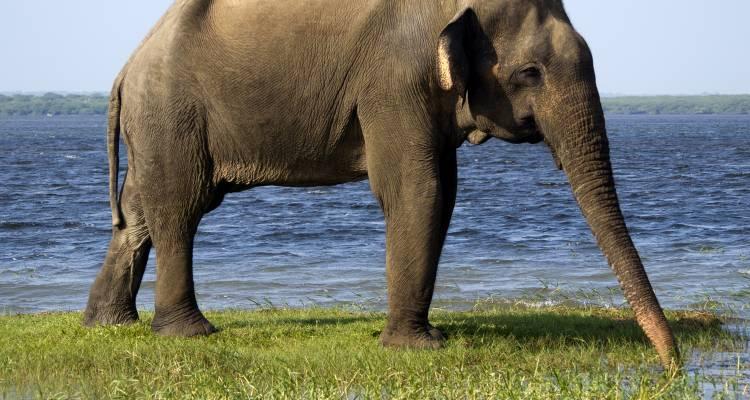Sri Lanka Highlights & Wildlife - 10 days