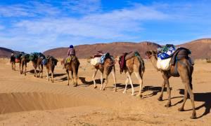 Camel caravan in the Sahara Desert - Morocco Tours - On The Go Tours