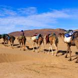 Camel caravan in the Sahara Desert | Morocco