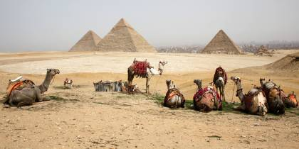 Camels in front of pyramids - Egypt Tours - On The Go Tours