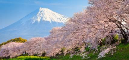Cherry Blossom Festival FAQ - menu tab image