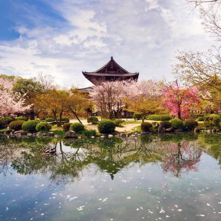 Cherry-Blossom-Festival-Japan Tours-On The Go Tours