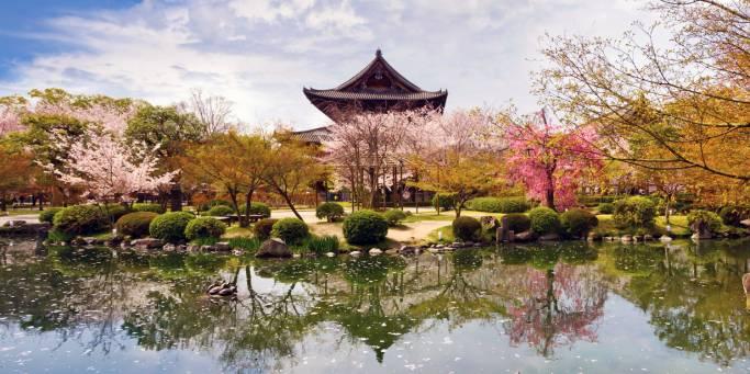 Cherry Blossom Festival | Japan