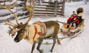 Christmas in Finland Reindeer - Finland - On The Go Tours