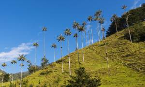 Cocora Valley landscape - Colombia - On The Go Tours