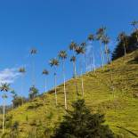 Cocora Valley | Colombia | South America