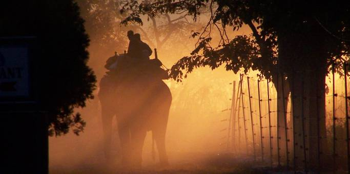 Elephant safari | Corbett National Park | India