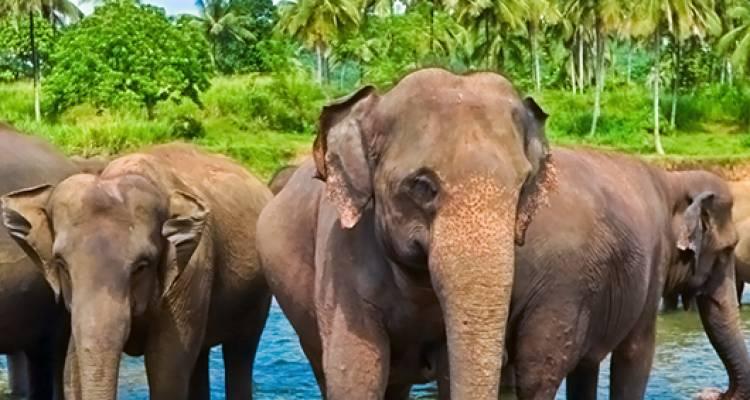 Safari in Sri Lanka - 9 days