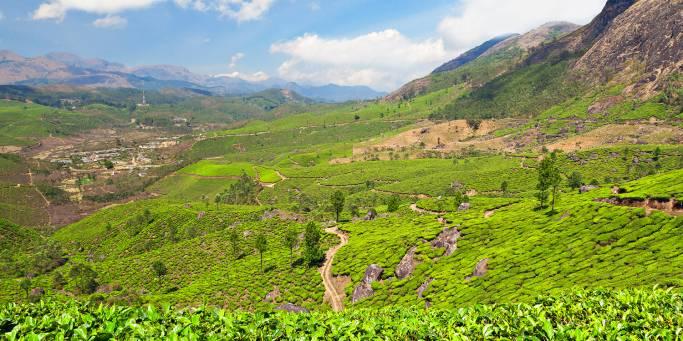 Darjeeling tea plantations | India