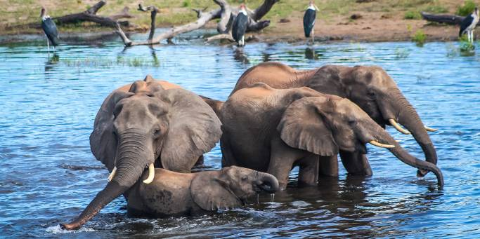 Elephant Lodge Safari 2019-Main-Image - Chobe Nationl Park - Africa Tours