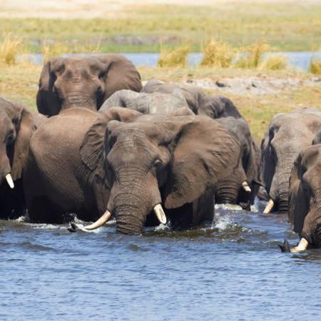 Elephant-Eco-Lodge-Main