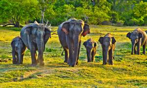 Elephants in Sri Lanka - On The Go Tours