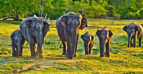 Elephants in Sri Lanka - On The Go Tours