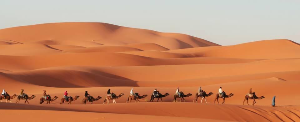 Camel walking through the Erg Chebbi sand dunes
