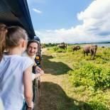 Family spotting elephants in Udawalawe National Park | Sri Lanka