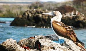 Galapagos-and-Inca-Express-Itinerary-2-Combo-Tours-South-America