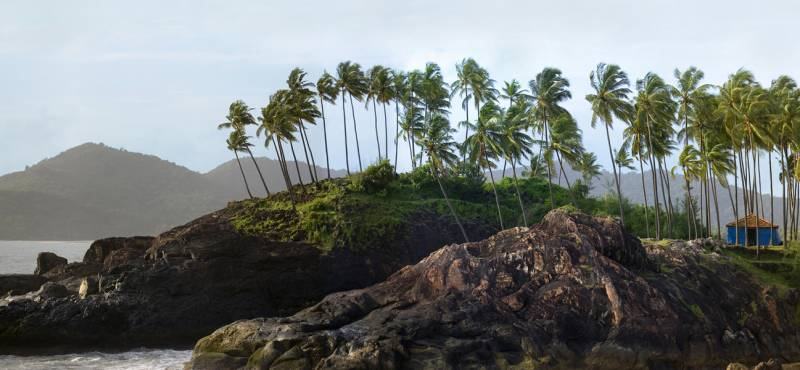 Palm trees line the scenic coastline of Goa in India where you can enjoy a number of day tours