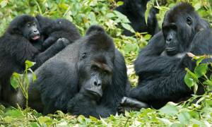Gorilla-Trek-And-Tanzania-Itinerary-Main-Overland-Journeys-Africa