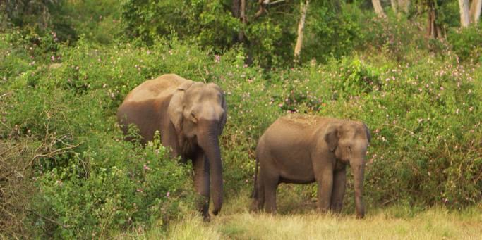 Wildlife spotting | Kerala | India