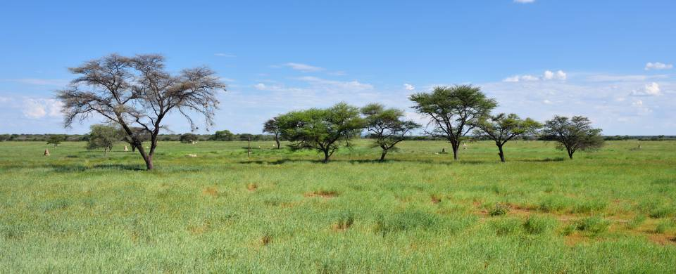 The beautiful, grassy landscape of the region surrounding Grootfontein