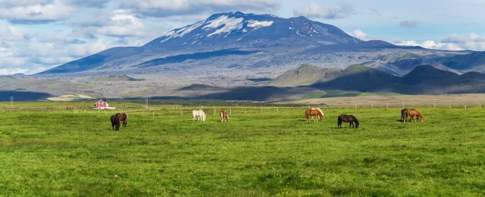 Horses grazing in front of the Helka stratovolcano near Hella