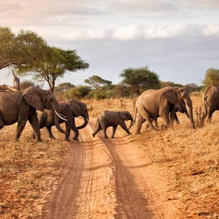 Herd of Elephants- Africa Overland Safaris - Africa Lodge Safaris - Africa Tours - On The Go Tours