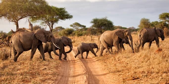 Herd of Elephants | African Safaris | Africa