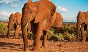 Herd of elephants - Africa Overland Safaris - Africa Lodge Safaris - Africa Tours - On The Go Tours