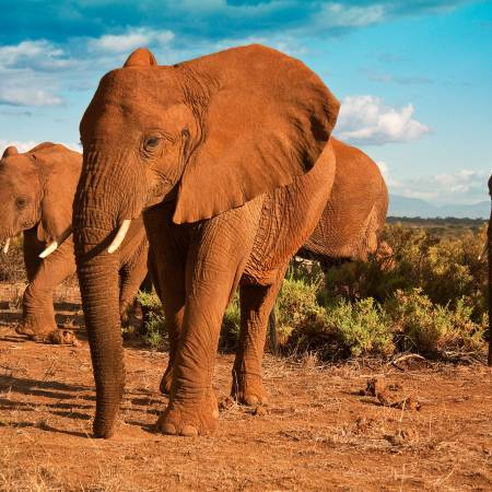 Herd of elephants - Africa Overland Safaris - Africa Lodge Safaris - Africa Tours - On The Go Tours
