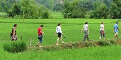 Hiking in the Rice Paddies Mai Chau