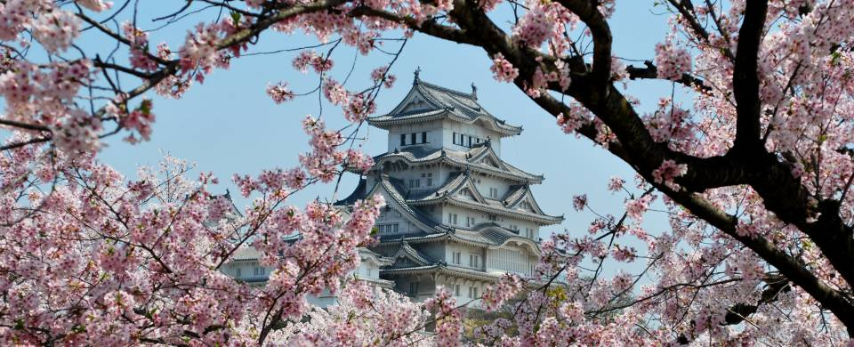 Himeji Castle, a World Heritage site, surrounded by cherry blossoms