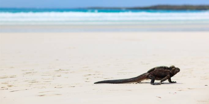 The Galapagos Islands | Ecuador | South America