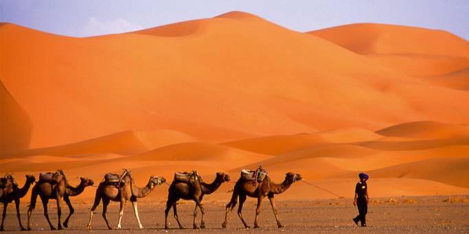 A camel caravan in the Sahara Desert | Morocco