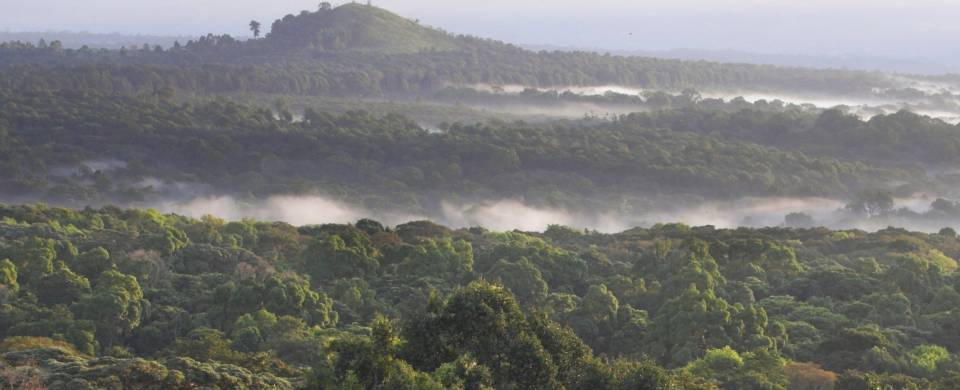 Kakamega Forest Reserve is one of the best places to visit in Kenya