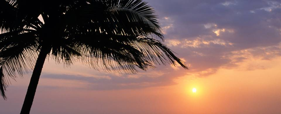 Sunset and a palm tree in Kalutara