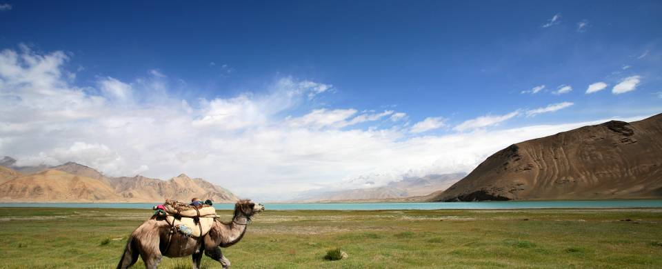 Camel with grassy plains and mountains in the background