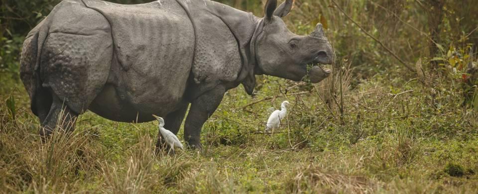 Rhino in the Kaziranga National Park