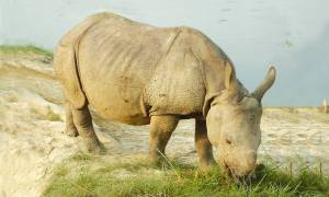 Kaziranga-and-the-Indian-Rhino-Bolt-Ons-India