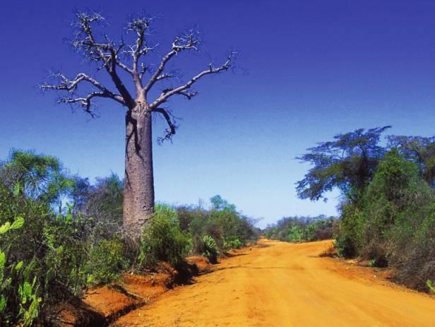 Gemsbok standing at a water hole at Etosha National Park
