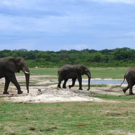 Kruger Walking Safari Main