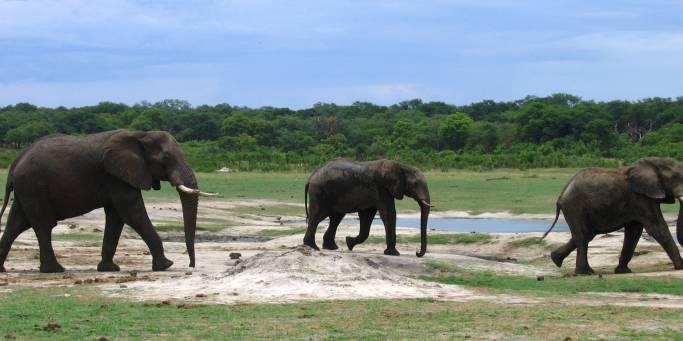 Elephants in Kruger | South Africa | Africa