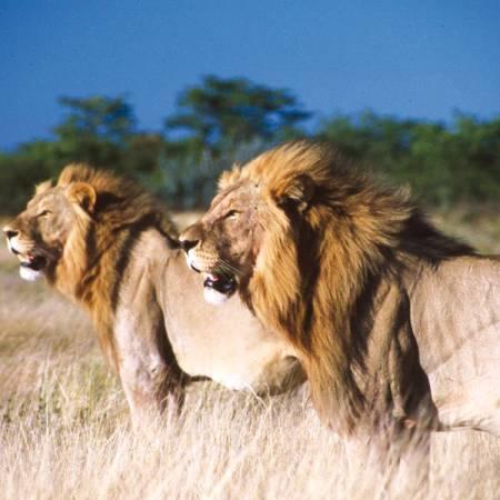 Kruger-Lodge-Safari-Itinerary-Main-Lodge-And-Hotel-Safaris-Africa