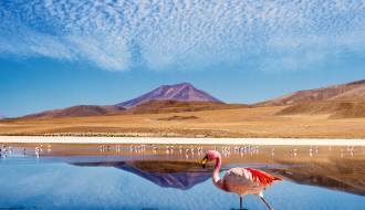 Laguna Colorada | Bolivia | South America
