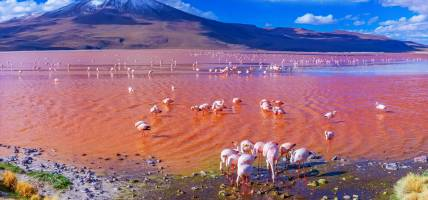 Laguna Colorada in Bolivia - On The Go Tours